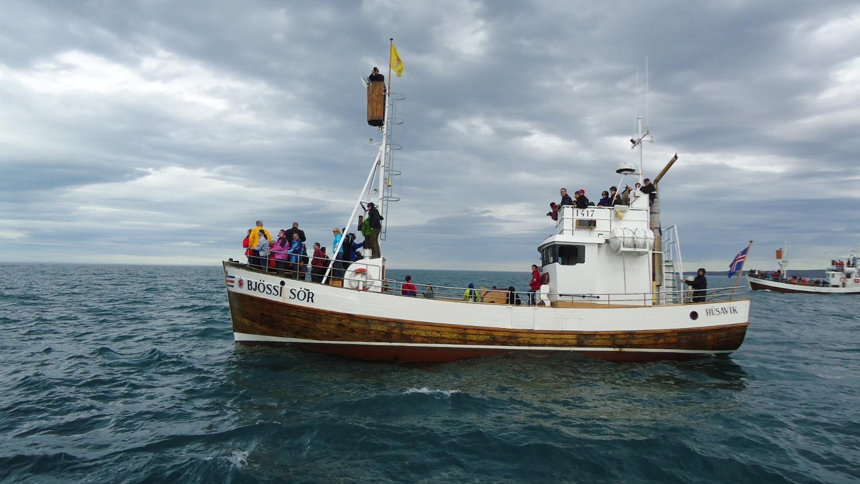 Whalewatching a caccia di balene a Húsavík