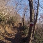 Inizio del bosco nel sentiero Atestino