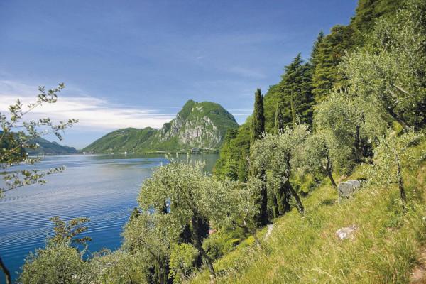 Sentiero dell'olivo a Lugano